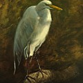 Egret On Branch by Greg Neal