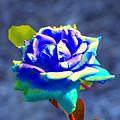 Electric Rose by Randie Lee