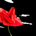 Elegant Poppy by Martine Affre Eisenlohr