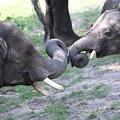 Elephant Greeting I by Mary Haber