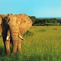 Elephant by Sebastian Musial