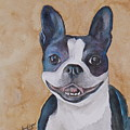 Emma The Boston Terrier by Amy Pilafas