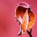 Empty Seed Pod  by Jeff Swan