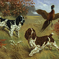 Energetic English Springer Spaniels by Walter A. Weber