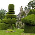 English Yew Topiary by Bob Kemp