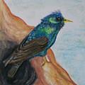 European Starling by Pamela Wilson