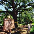 Evangeline Oak St Martinville Louisiana by Thomas R Fletcher
