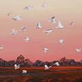 Evening Flight by Ekaterina Mortensen