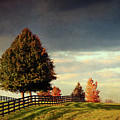 Evening Pasture by Susan Isakson