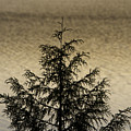 Evergreen Lake by Richard Steinberger