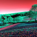 Exmoor In The Pink by Rob Hawkins