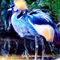 Exotic Bird by Elinor Mavor