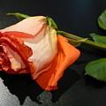 Fading Rose by Florene Welebny