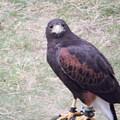 Falcon IIi by Edward Wolverton