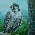 Falcon by Perrys Fine Art