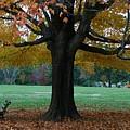 Fall At Maymont by Tina Meador