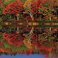 Fall Color Reflected In Thornton Lake Michigan by Dave Welling