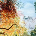 Fall Colors by William  Nelson