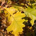 Fall Colours by Lori DeBruijn