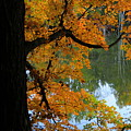 Fall Day At The Lake by David Arment