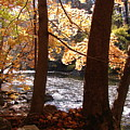 Fall Flows by Reel Shots