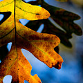 Fall Foliage Leaf Near Ruidoso Nm by Matt Suess