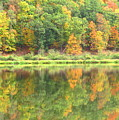 Fall Forest Reflection by Joshua Bales