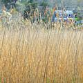 Fall Grass by AnnaJanessa PhotoArt