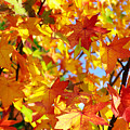Fall Leaves Background by Carlos Caetano