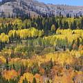 Fall On The Greys River by DeeLon Merritt