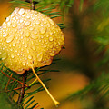 Fall Raindrops by Adam Pender