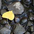 Fall Simplicity by Melanie Rainey