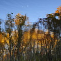 Fall Trees Reflected by David Arment