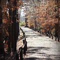 Fall Wonder Land by Kim Henderson