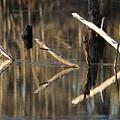 Fallen Trees by Lori Mellen-Pagliaro