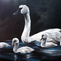 Family Of Swans by Maryn Crawford