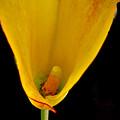 Fan Blossom by Debra     Vatalaro