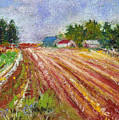 Farm Rows by David Patterson