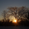 February Sunrise Behind Elm Tree by Kent Lorentzen