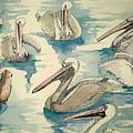 Feeding Pelicans by Rebecca Marona