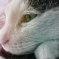 Feline Zen by JAMART Photography