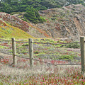 Fence Fort Fungston by Liz Santie