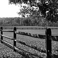 Fence Perspective by Kristin Elmquist