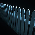Fence by Steve Williams