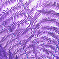 Fern Passion by Suzanne Gaff