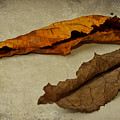 Feuilles D'automne by Angela Doelling AD DESIGN Photo and PhotoArt