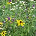 Field Of Wildflowers by Donna  Davis