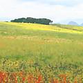 Fields by Jan Hattingh