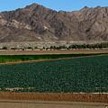 Fields Of Yuma by Greg Patzer