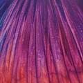 Fireworks II by Anna Villarreal Garbis